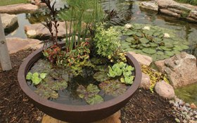 Category-Patio-Ponds